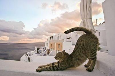 gatos_gregos