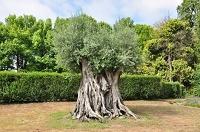 oliveira02